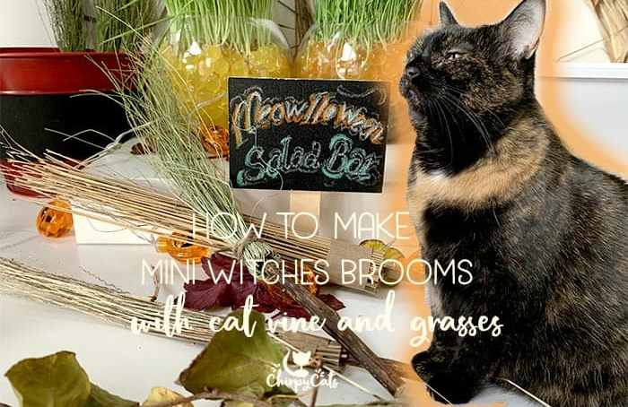 tortoiseshell cat sitting next to water fountain meowlloween salad bar