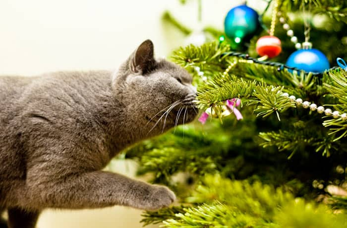cat sniffing Christmas tree