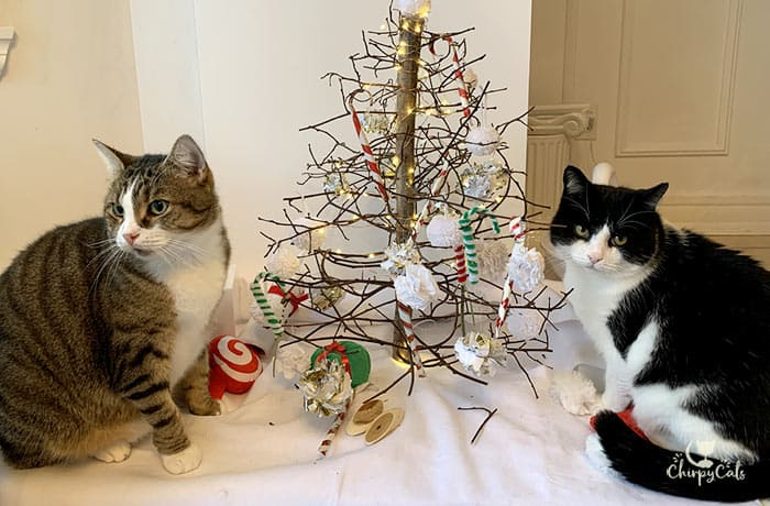 tuxedo and tabby cat posing at the festive kitty corner enrichment display