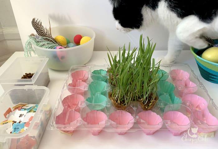 curious tuxedo cat investigating DIY cat food puzzle