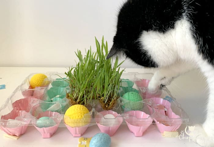 cute cat playing with diy puzzle feeder made from egg cartons and bread ties