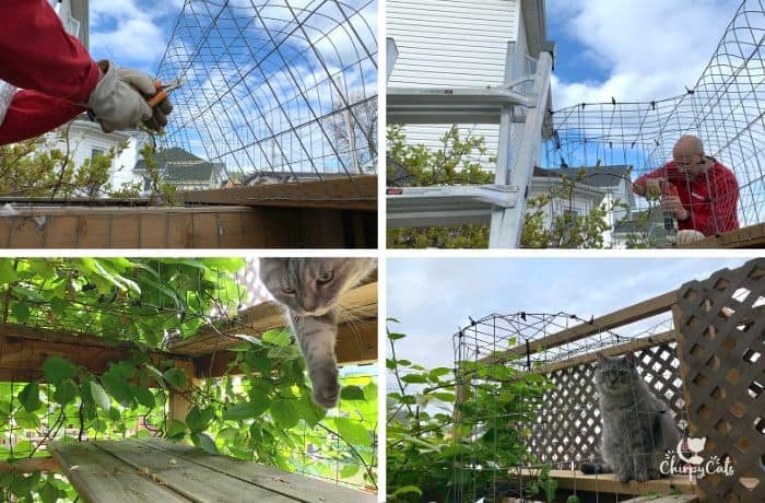 how to build an outdoor cat bridge, attaching the vestibule