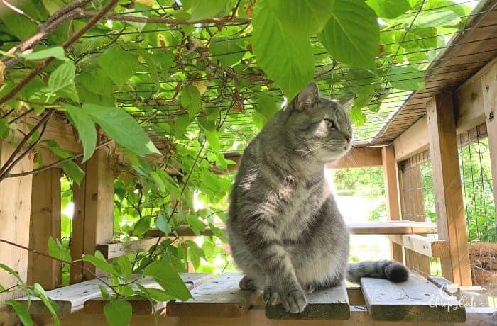 grey cat in catio with vine