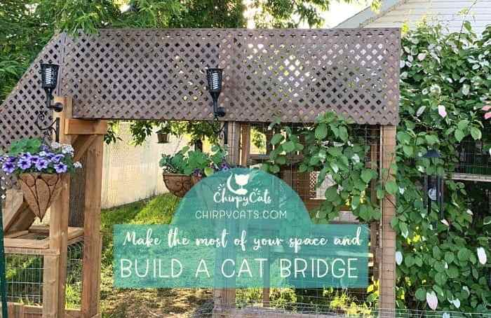 build an outdoor catio bridge