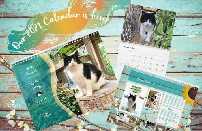 life of Sly the rescue cat wall calendar