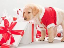 5 Ideas for Christmas Gifts for Your Pet Dog