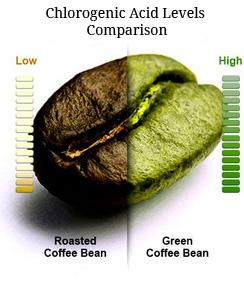 cafe-verde-acido-clorogenico
