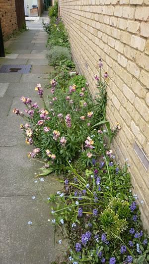 deans lane guerilla gardening