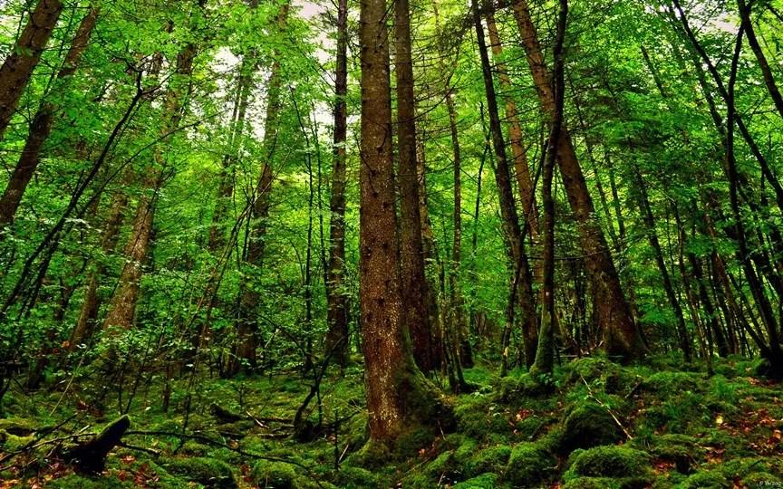 300 години са нужни, за да се опишат всички дървесни видове в Амазония