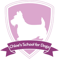 Chloe's School for Dogs