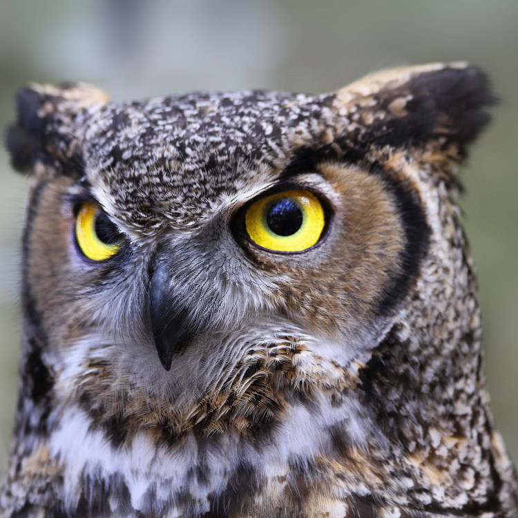 October 26th - The Living Coast Discovery Center presents: 'Owl-o-Ween!'