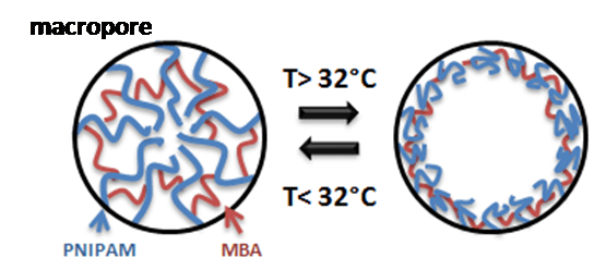The temperature-dependent behaviour of pores filled with PNIPAM