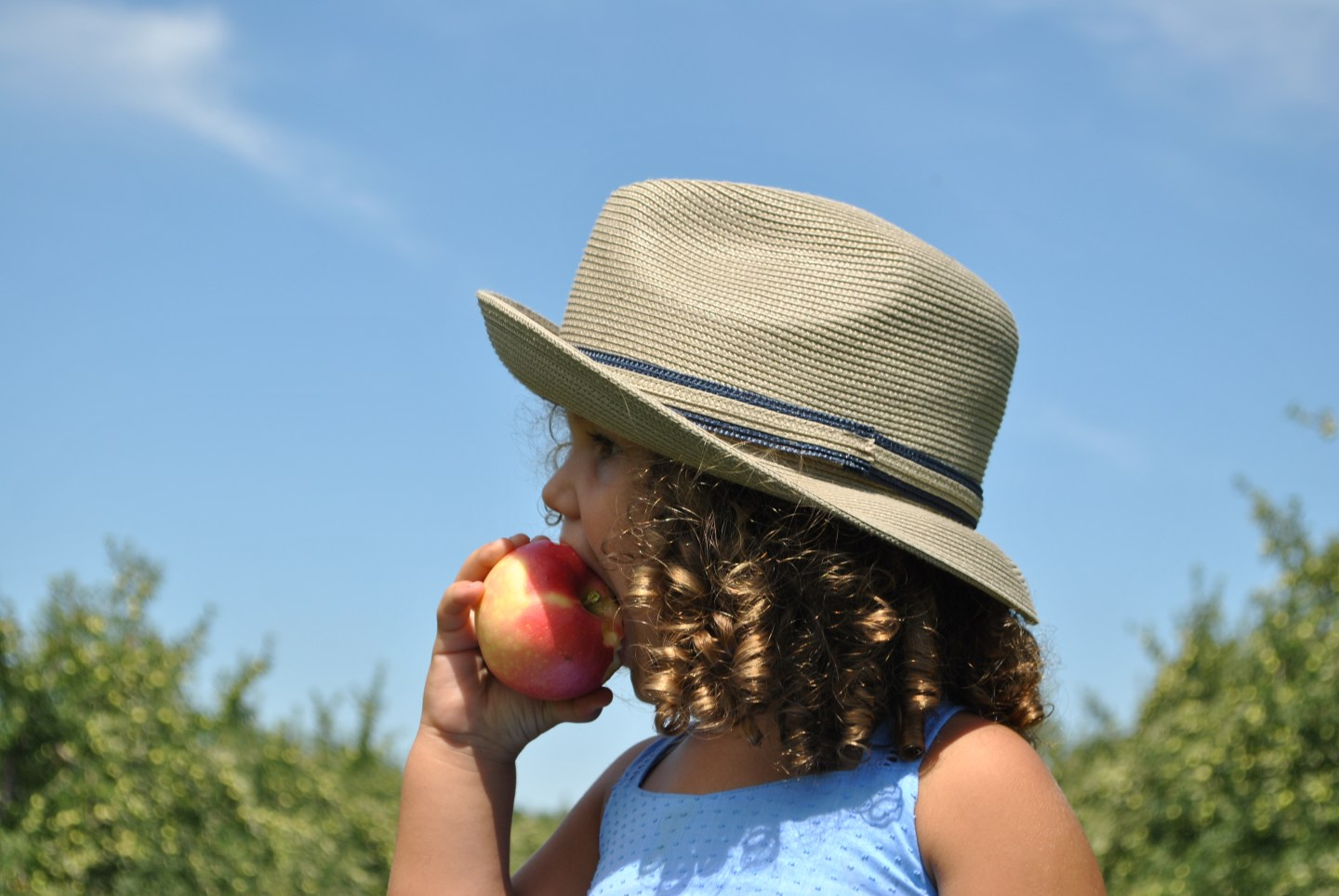 The Best Connecticut Farms for Apple and Pumpkin Picking
