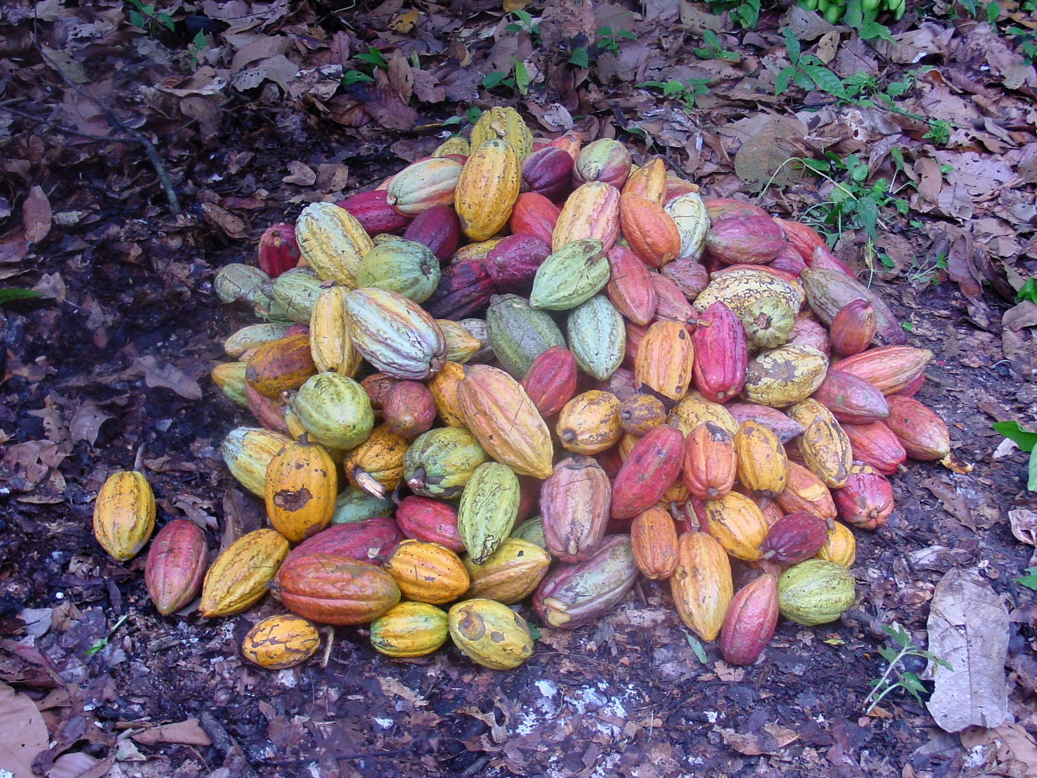 Chocolate Tasting Program – December 3, 2107 at 4:00pm