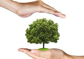 Hands covering tree