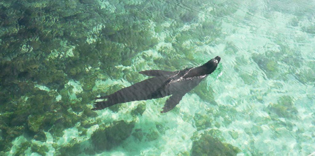 Day trip to Pinzon - Galapagos tours by #ChokoTrip