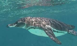 Pinzon Island Galapagos