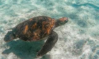 Day tour to Pinzon Island Galapagos