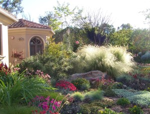 Profusion-of-drought-tolerant-perennials-and-grasses