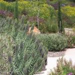 Mediterranean Garden Scene