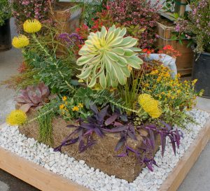 "My ""Fun-tainer"" plants –  as seen at the Del Mar Spring Home Garden Show 2011"