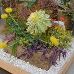 succulents and perennials in hypertufa container