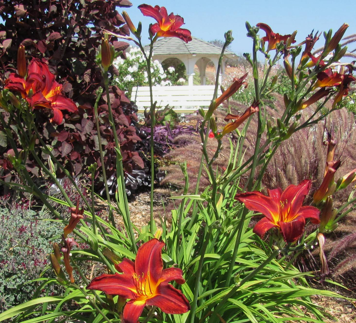xeriscape design hot and lush yet waterwise – tropical look
