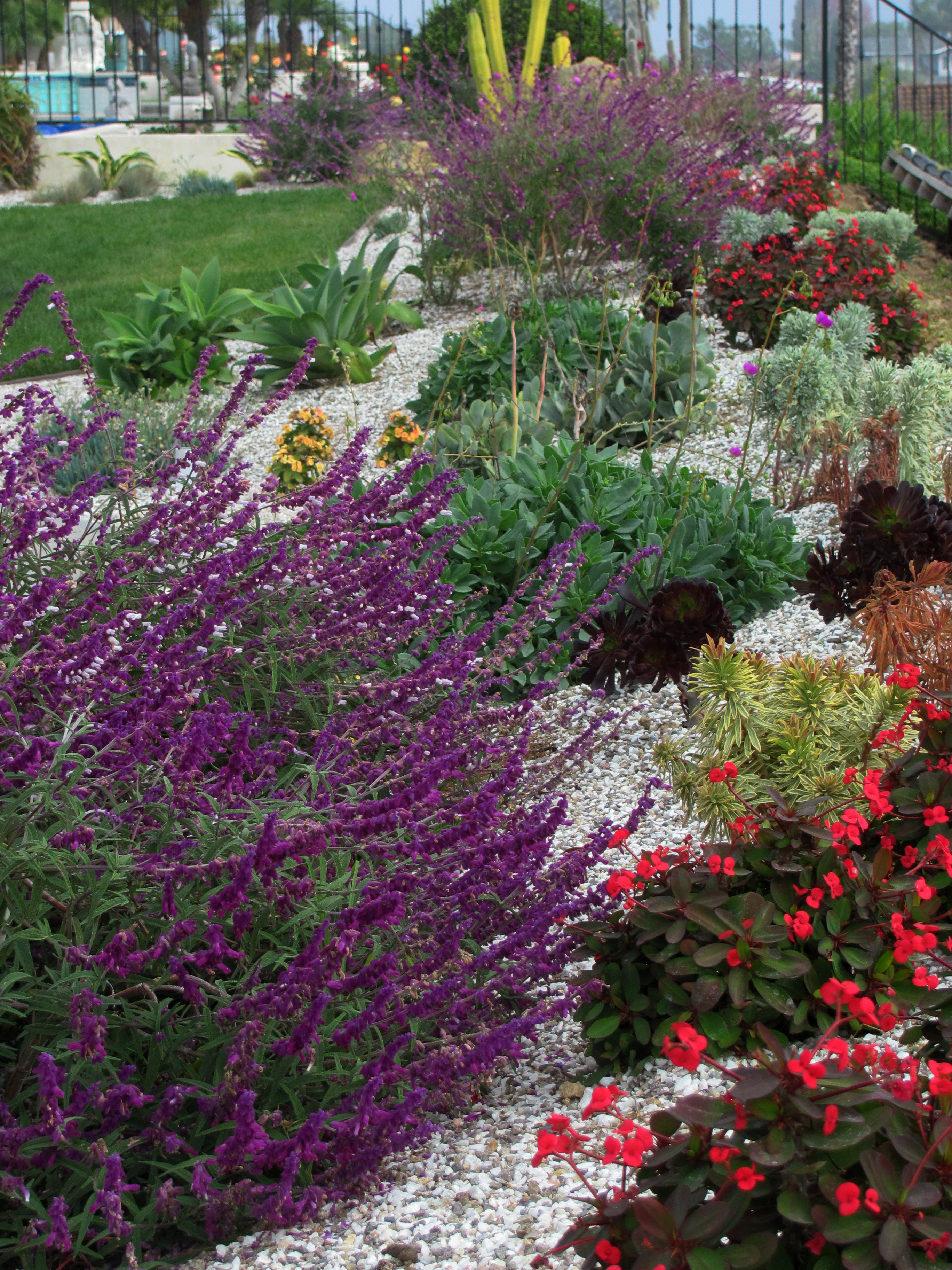 Sustainable landscape design celebrating california at for Low maintenance colourful plants