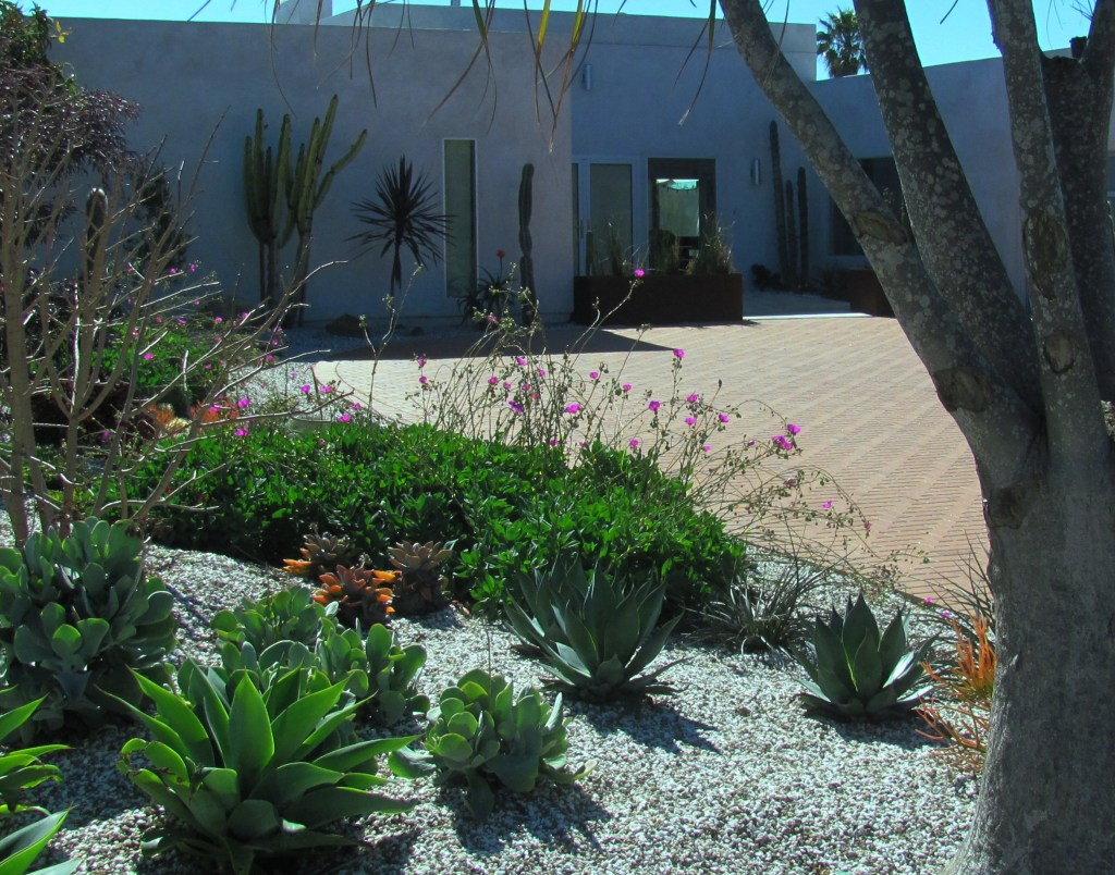 The xeriscape design of the front yard