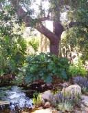 Oak and shade garden