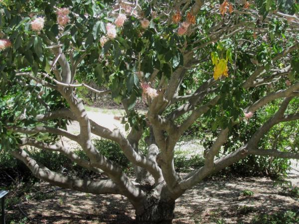 Xeriscape Landscaping With California Natives
