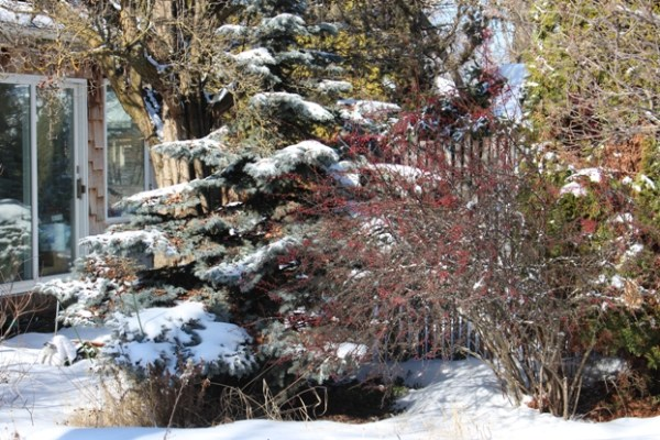 Winter landscaping with Billie Gray A lifelong love affair of gardening in the Rockies