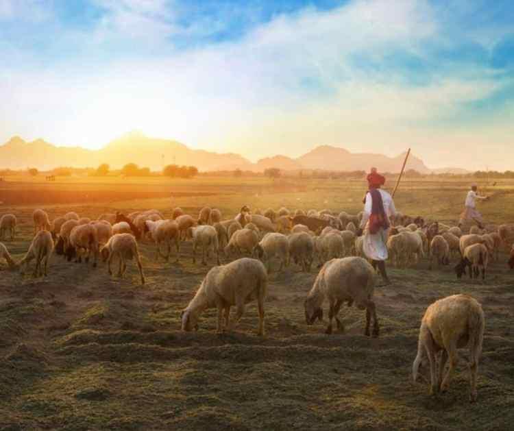 Love of the Good Shepherd