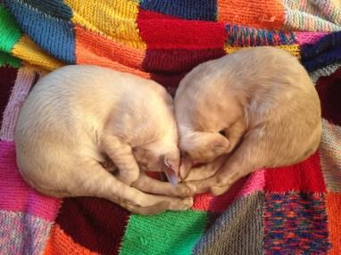 Saffy & Monty