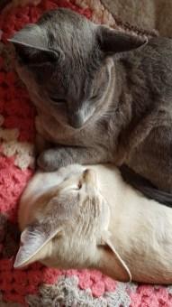 Herc & Sylvia