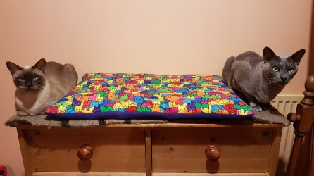 New Bed!