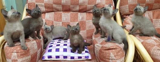 7 Kittens!