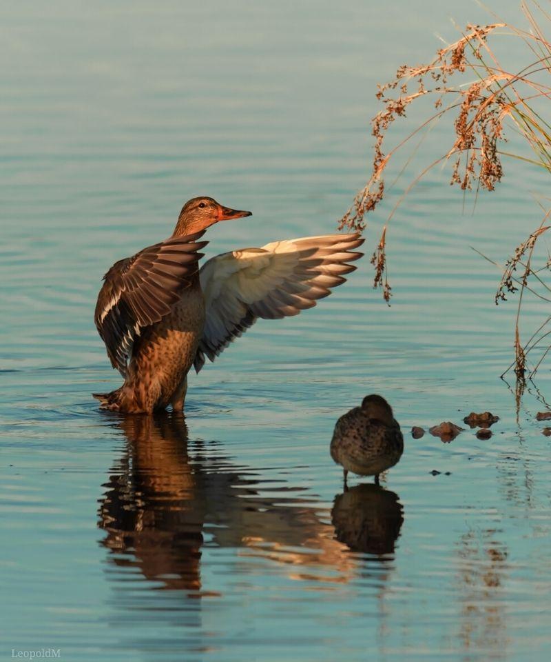 obserwacja ptaków w Dolinie Neretwy