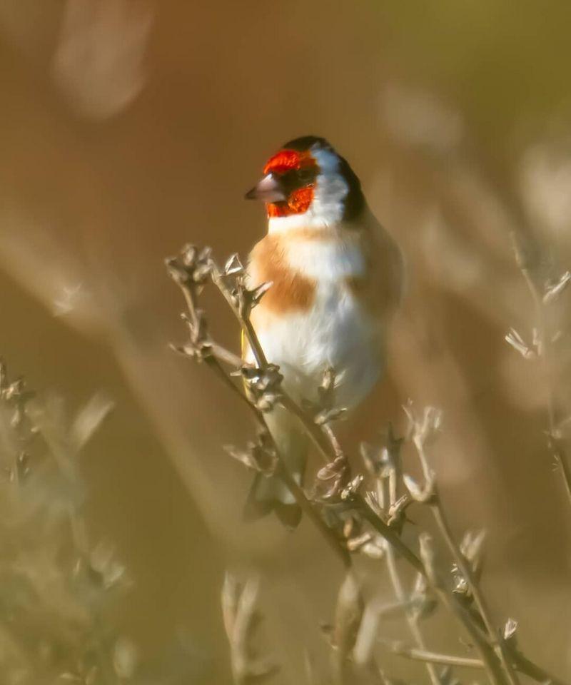 ptak w Dolinie Neretwy