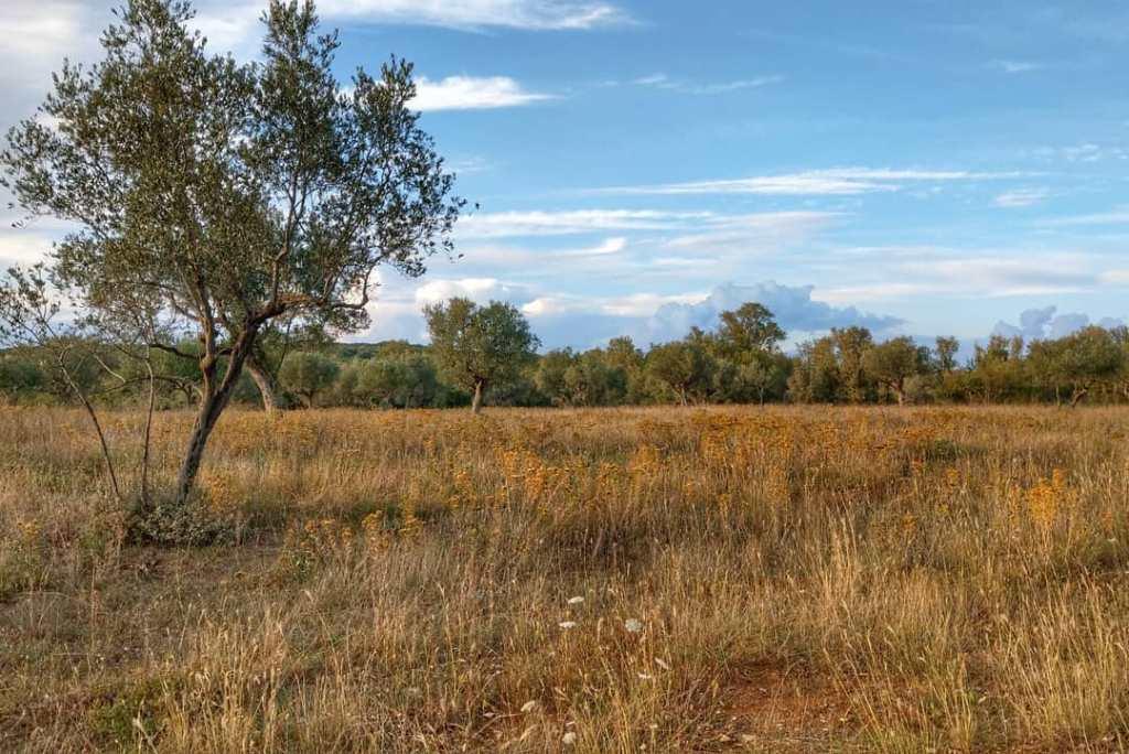 łąka w rezerwacie ornitologicznym Palud