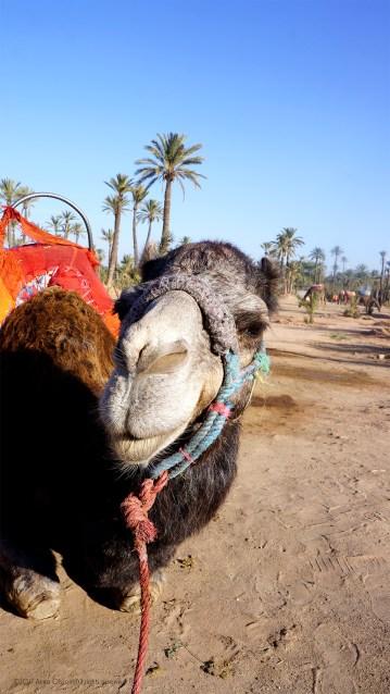 A short camel ride.