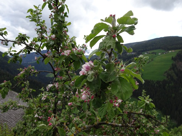 Furkenpass from Bruneck, Italy (8)