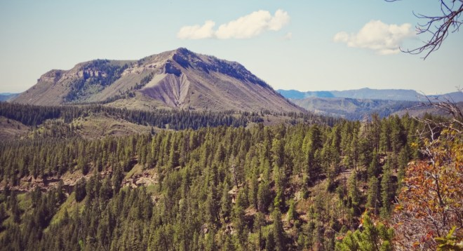 Just a small stretch of the unending forests around Durango