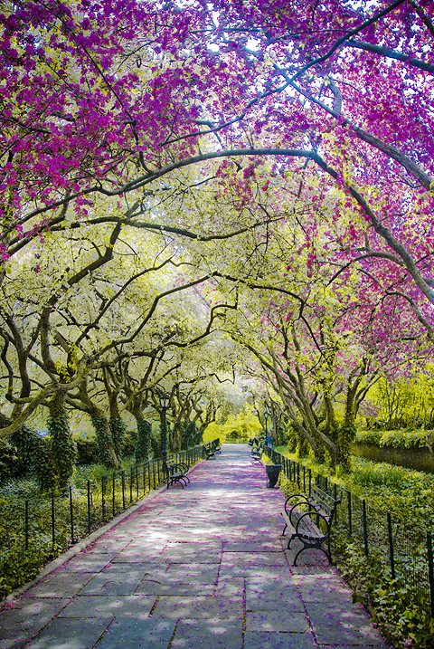 nyc central park conservatory gardens in full spring bloom - Central Park Conservatory Garden