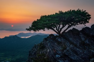 A Tree Made for Photographers