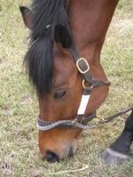 Assiniboia Downs Horse