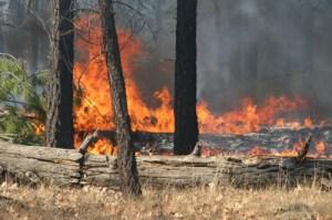 Controlled Burn Fire