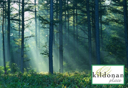 Kildonan Place - Forest