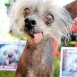 World's Ugliest Dog