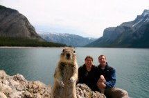 Crash Squirrel - Banff